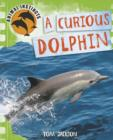 Image for A curious dolphin