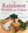 Image for Rainforest Wildlife to Colour