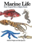 Image for Marine life  : from tropical fish to mighty sharks