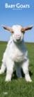 Image for BABY GOATS 2019 SLIM CALENDAR