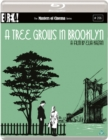 Image for A   Tree Grows in Brooklyn - The Masters of Cinema Series