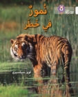 Image for Tigers in Danger : Level 10