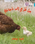 Image for Chick to hen