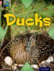 Image for Ducks