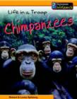 Image for Life in a troop - chimpanzees