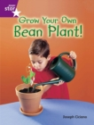 Image for Rigby Star Guided Quest Purple: Grow Your Own Bean Plant!