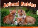 Image for Animal babies