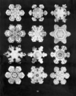 Image for Bentley's snowflakes