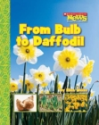 Image for From Bulb to Daffodil (Scholastic News Nonfiction Readers: How Things Grow)