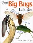 Image for Big bugs life-size