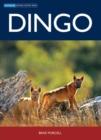 Image for Dingo