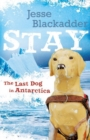 Image for Stay : The Last Dog In Antarctica