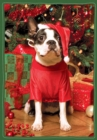 Image for Santa's Little Helper Boxed Holiday Notecards