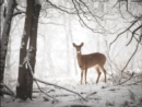 Image for Doe in the Forest Large Embellished Holiday Notecards