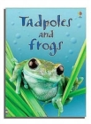 Image for Tadpoles and frogs