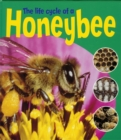 Image for The life cycle of a honeybee
