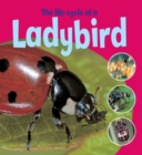 Image for The life cycle of a ladybird