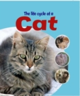 Image for The life cycle of a cat