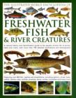 Image for The illustrated world encyclopedia of freshwater fish & river creatures  : a natural history and identification guide to the aquatic animal life of ponds, lakes and rivers, with more than 700 detaile