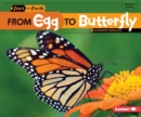 Image for From Egg to Butterfly
