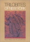 Image for Trilobites of New York  : an illustrated guide