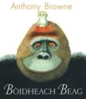 Image for Báoidheach beag