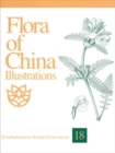 Image for Flora of China Illustrations, Volume 18 - Scrophulariaceae through Gesneriaceae