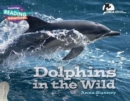 Image for Dolphins in the wild