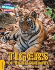 Image for Looking for a tiger gold band