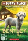 Image for Bentley (The Puppy Place #53)