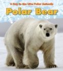 Image for Polar bear