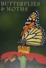 Image for Butterflies & moths