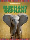 Image for Elephant orphans