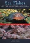 Image for Sea fishes of the Mediterranean including marine invertebrates
