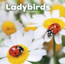 Image for Ladybirds