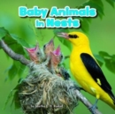 Image for Baby animals in nests