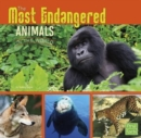 Image for All About Animals: Most Endangered