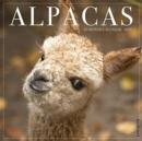 Image for Alpacas 2020 Wall Calendar