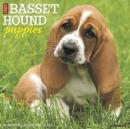 Image for Just Basset Hound Puppies 2020 Wall Calendar (Dog Breed Calendar)
