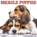 Image for Just Beagle Puppies 2020 Wall Calendar (Dog Breed Calendar)