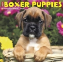 Image for Just Boxer Puppies 2020 Wall Calendar (Dog Breed Calendar)