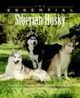 Image for The essential Siberian husky