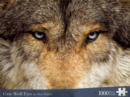 Image for Gray Wolf Eyes