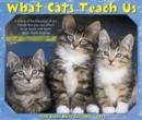 Image for What Cats Teach Us 2018 Box Calendar