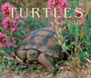 Image for Turtles 2017