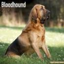 Image for Bloodhound Calendar 2019