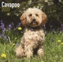 Image for Cavapoo Calendar 2020