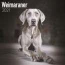Image for Weimaraner 2021 Wall Calendar