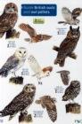 Image for Guide to British Owls and Owl Pellets