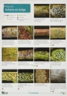 Image for A Key to Lichens on Twigs
